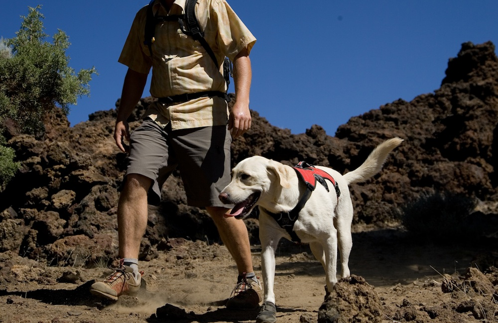 Hiking With Your Pets