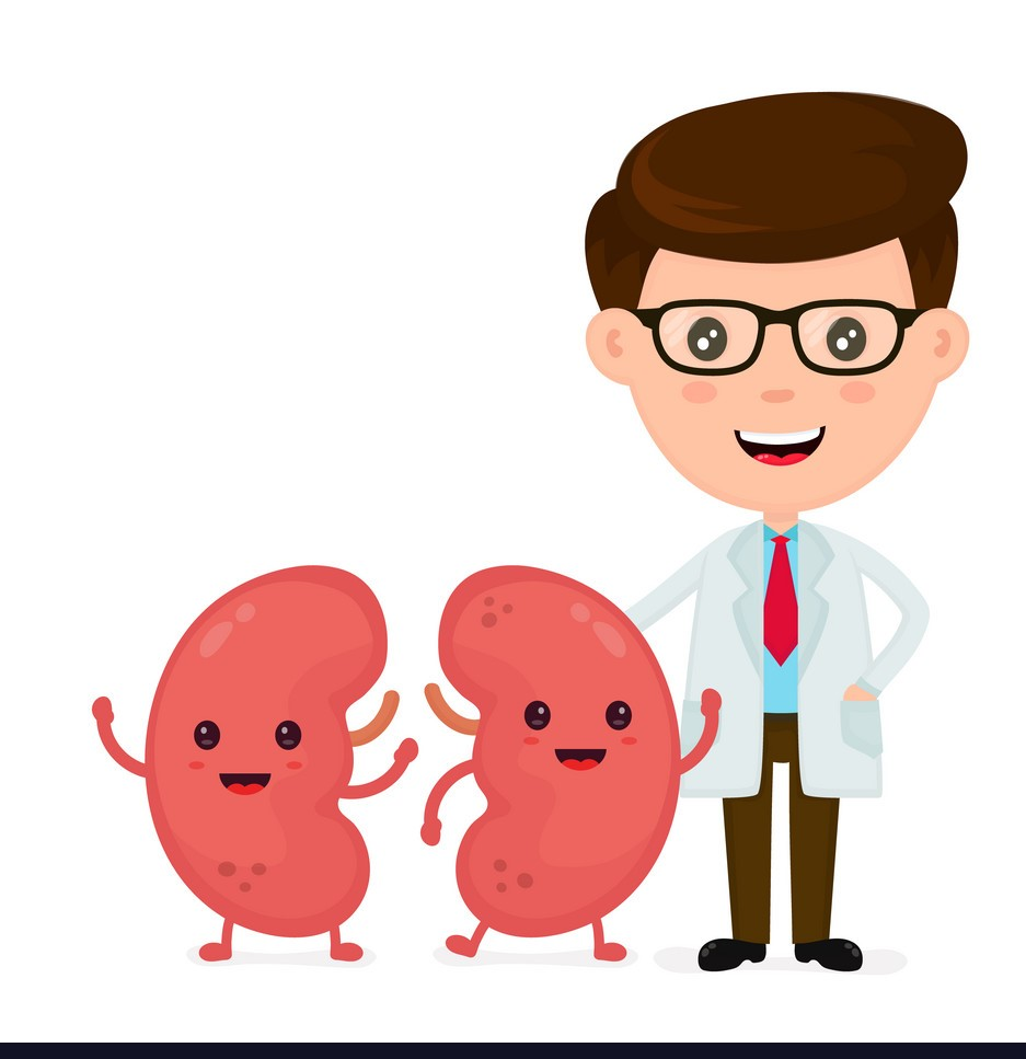 Kidneys & Problems Affecting them