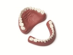 Denture Set MODEL- Upper/Lower - Adult