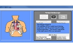 Heart and Lung Sounds Software – Adult