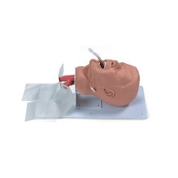 Economy Adult Airway Management Trainer
