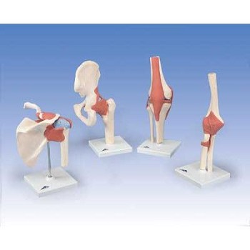 Deluxe Functional Hip Joint