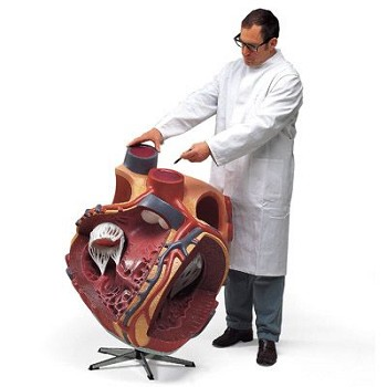 Injection Simulator (Buttock)